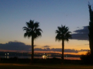 Palms in the evening